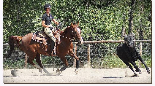 Regina schooling a western horse
